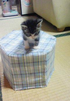 牛乳パック椅子に登れたビリー