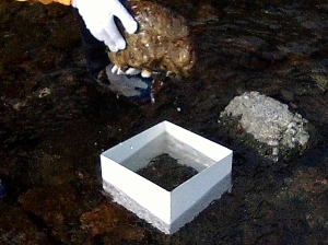 03 耕し前の水生昆虫調査