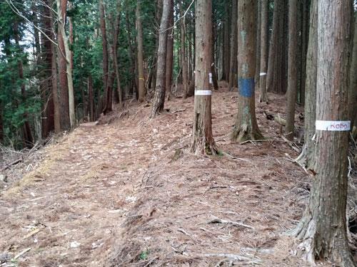 sawahara100-036.jpg