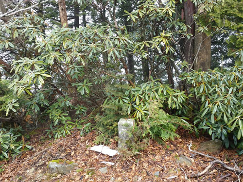 shinohara120-070.jpg
