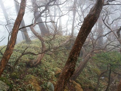 shinohara120-104.jpg