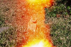 cat photo (stupid mistake)