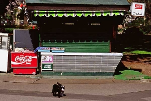 kiosk cats