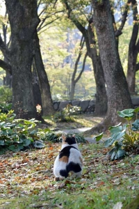 April Cat Tokyo