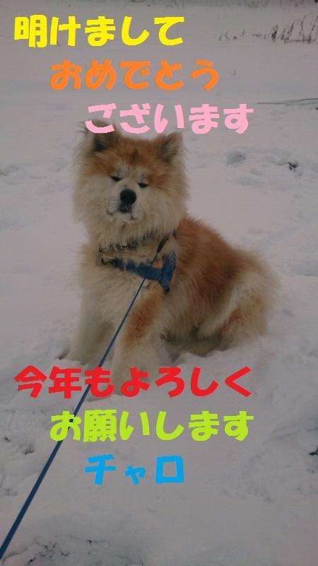 DSC_4305_20160101084744842.jpg