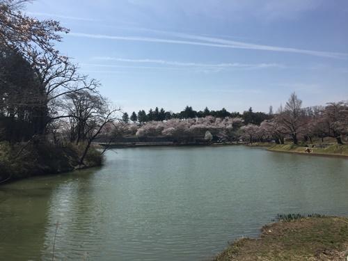 八木羽湖3