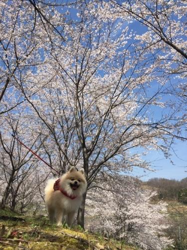 矢木羽湖6