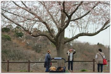 H28040203成田市さくらの山公園