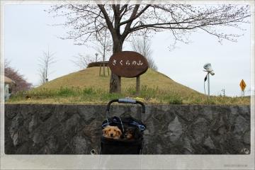 H28040201成田市さくらの山公園