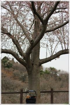 H28040204成田市さくらの山公園