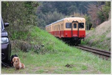 H28040802小湊鐵道里山トロッコ列車