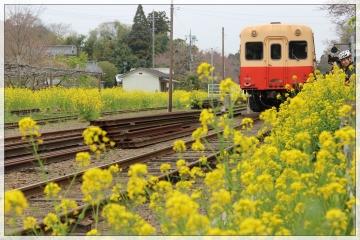 H28040810小湊鐵道里山トロッコ列車
