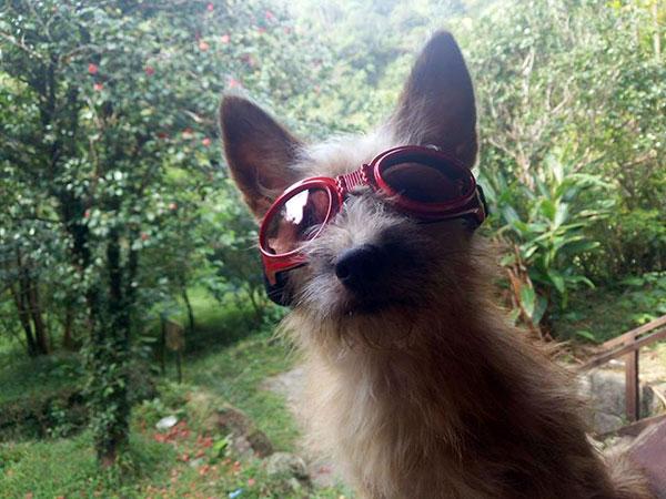 犬用のサングラス