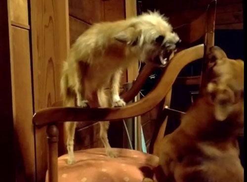 愛犬サンシン、愛犬物語