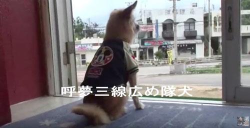 愛犬サンシンちゃん2012年2月NO6
