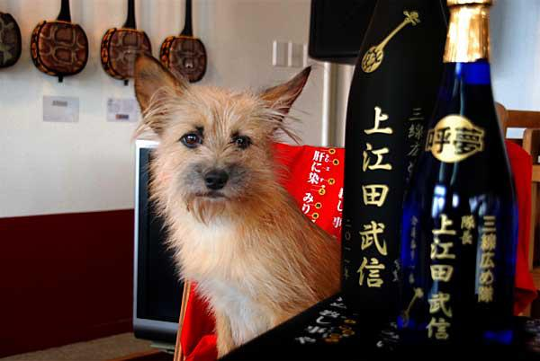 愛犬サンシンちゃん 名入れ記念ボトル