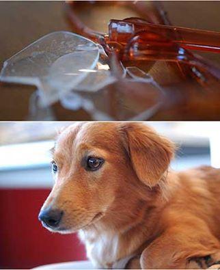 愛犬サンバ