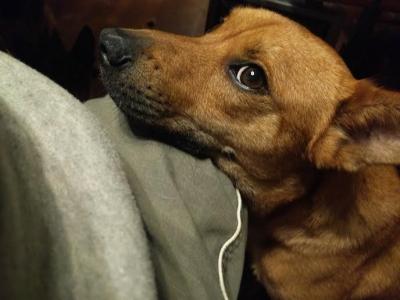 愛犬サム 愛犬物語