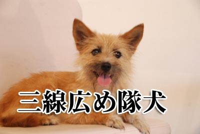 愛犬サンシンちゃん 愛犬物語