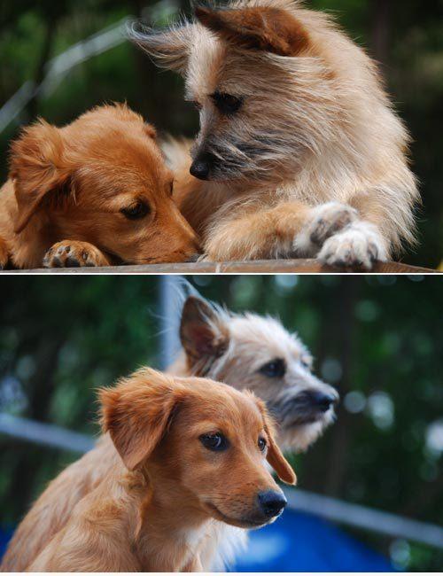 愛犬サンシン サンバちゃん