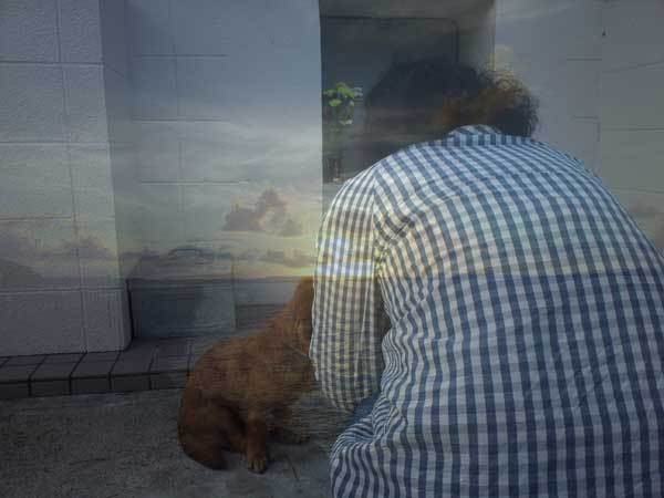 愛犬サンバ 愛犬物語