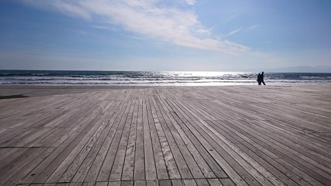 sandy-wood.jpg