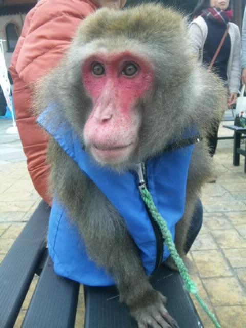 黒潮市場の猿20160001