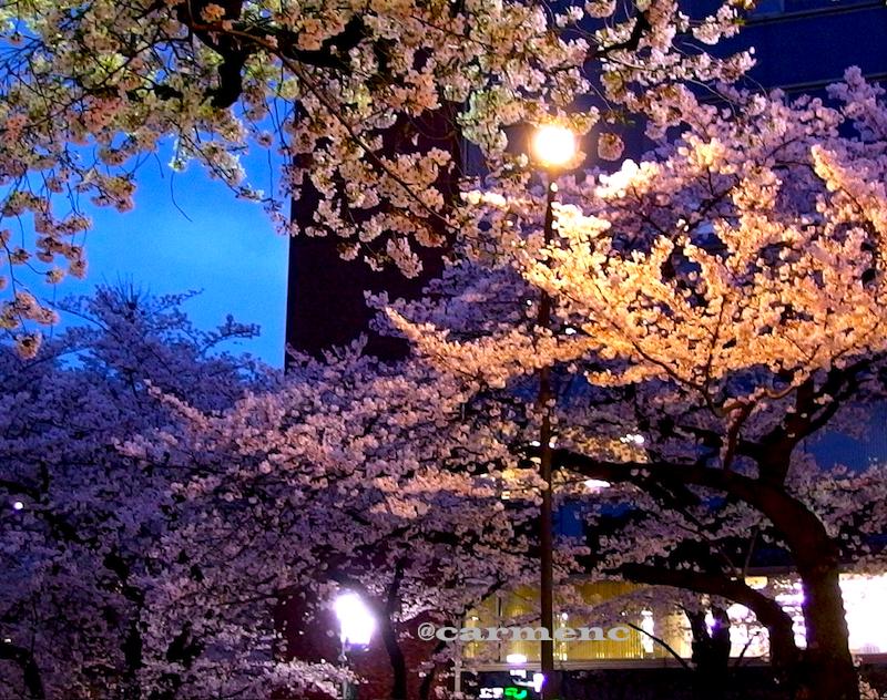 銀行前バス停桜