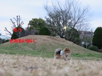 0313早稲田公園 010