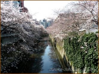 20160329  桜  1  まだ桜