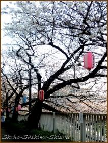 20160329  桜  2  まだ桜