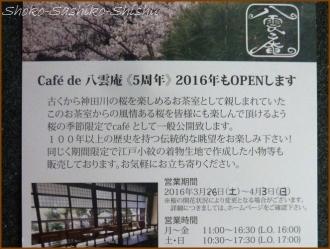 20160329  八雲庵  1  まだ桜
