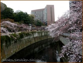 20160331  桜  3   花より