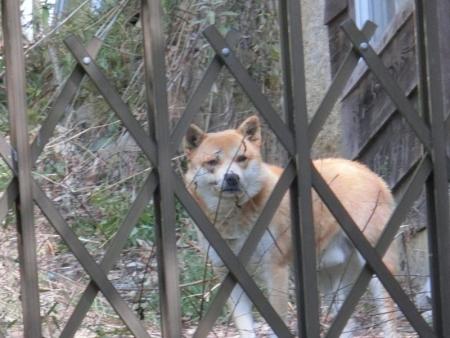 倉敷公園犬16-03-14-01