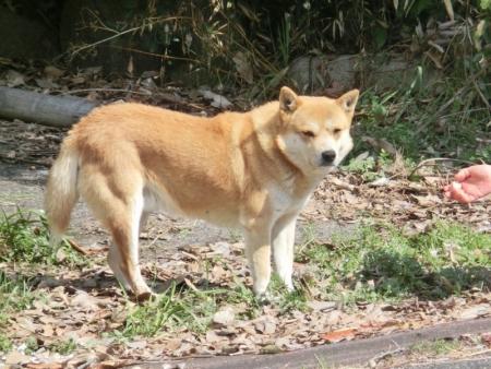 倉敷公園犬16-03-14-02