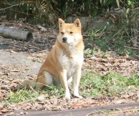 倉敷公園犬16-03-14-03
