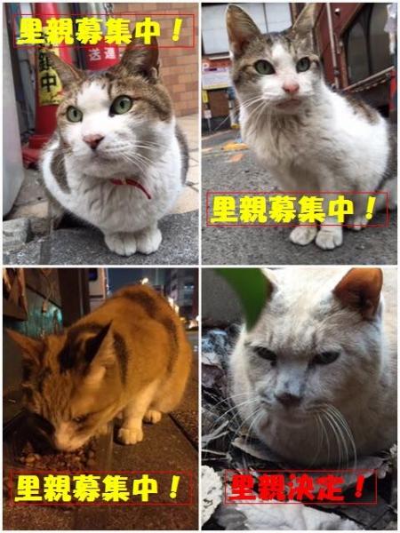 千代田区猫005