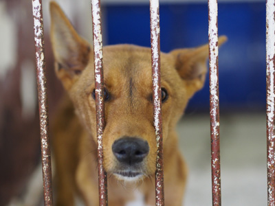 宮崎犬管理所-16-03-29-001