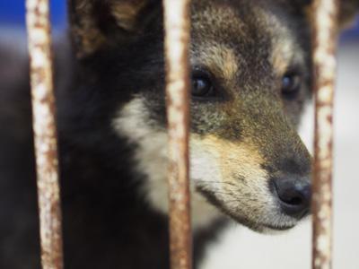 宮崎犬管理所-16-03-29-004