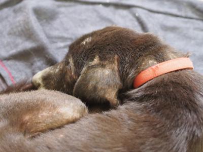 宮崎犬管理所-16-03-29-007