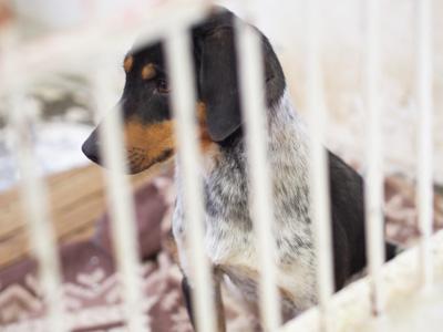 宮崎犬管理所-16-03-29-016