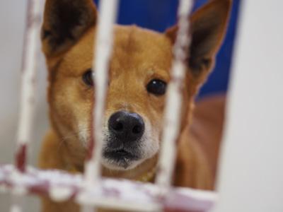 宮崎犬管理所-16-03-29-020