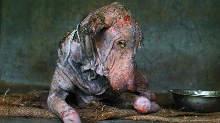 animal-aid001.jpg