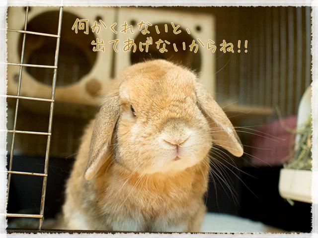 cookieblo1602214.jpg