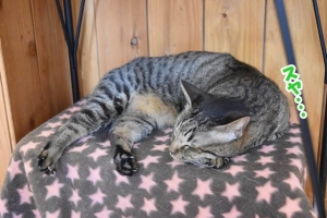 JRウォーキング猫カフェ 037