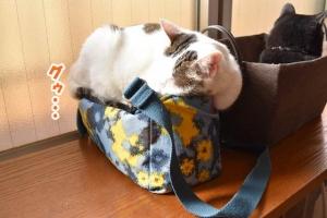 JRウォーキング猫カフェ 033