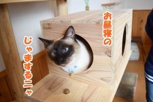 JRウォーキング猫カフェ 048