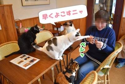 JRウォーキング猫カフェ 061