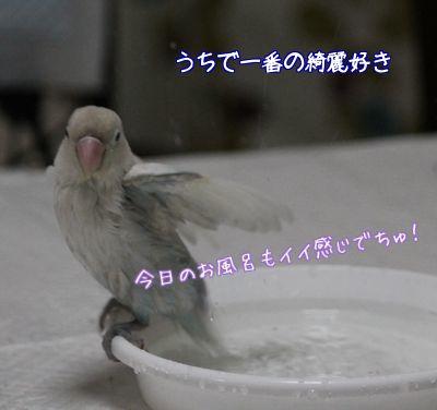 ロワの水浴び4