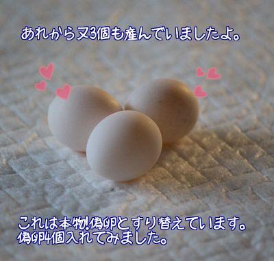 レーヌの卵が3個